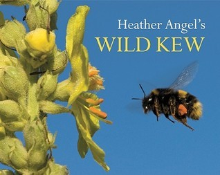 Heather Angels Wild Kew  by  Heather Angel