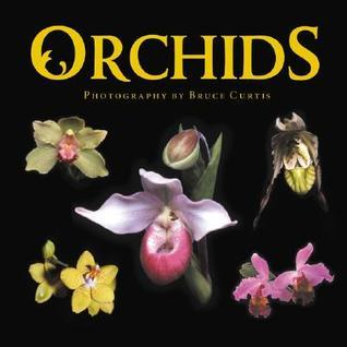 Orchids Bruce   Curtis