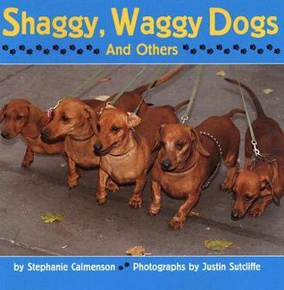 Shaggy, Waggy Dogs Stephanie Calmenson
