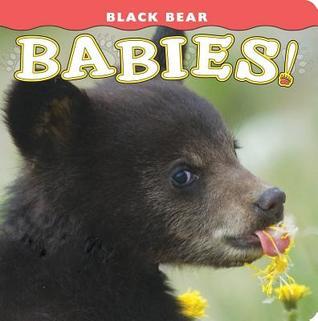Black Bear Babies!  by  Donald M. Jones