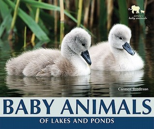 Baby Animals of Lakes and Ponds  by  Carmen Bredeson