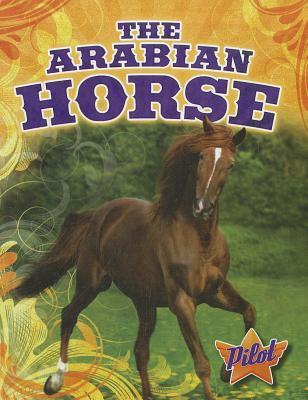 The Arabian Horse Sara Green