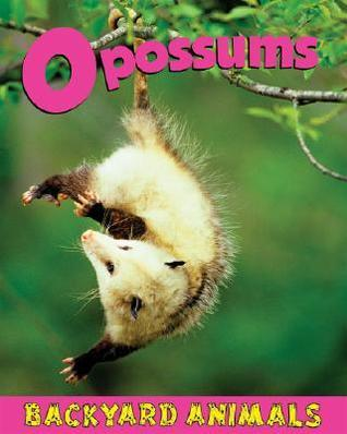 Opossums  by  Christine Webster