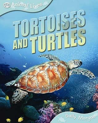 Tortoises And Turtles Sally   Morgan