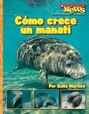 Como Crece Un Manati = A Manatee Calf Grows Up  by  Katie Marsico