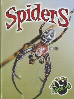 Spiders Don McCleese