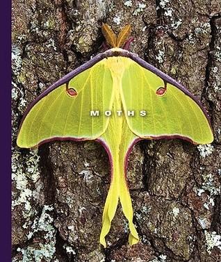 Moths  by  Sophie Lockwood