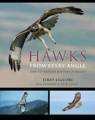 Hawks from Every Angle: How to Identify Raptors in Flight Jerry Liguori