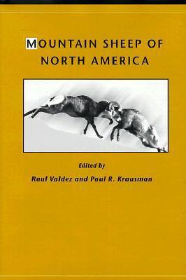 Mountain Sheep of North America Raul Valdez