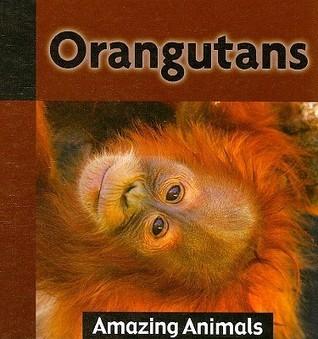 Orangutans Michael De Medeiros
