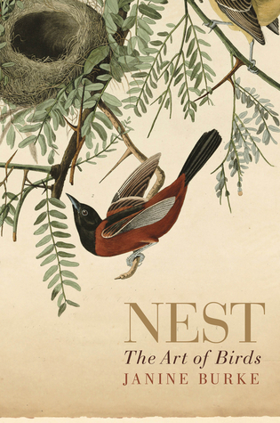 Nest: The Art of Birds  by  Janine Burke