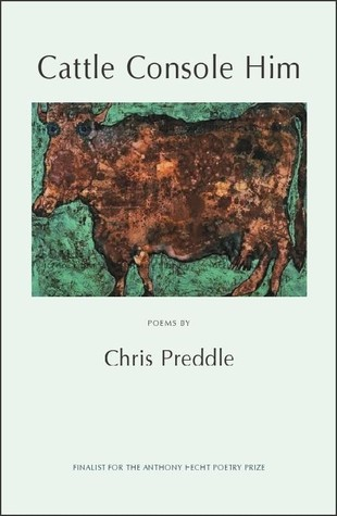 Cattle Console Him  by  Chris Preddle