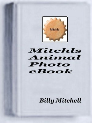 Mitchls Animal Photo Book  by  Billy Mitchell