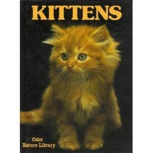 Kittens David Gibbon