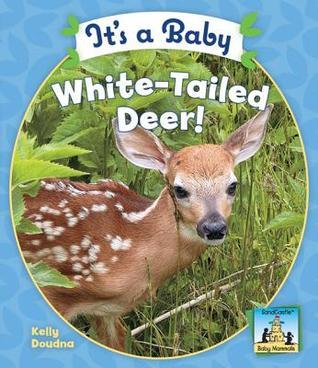 Its a Baby White-Tailed Deer! Kelly Doudna