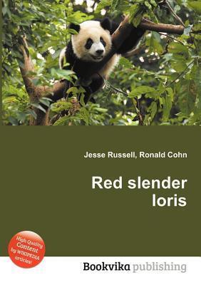 Red Slender Loris Jesse Russell