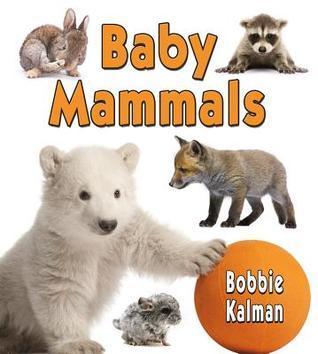 Baby Mammals Bobbie Kalman