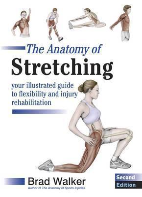 The Anatomy Of Stretching Brad Walker