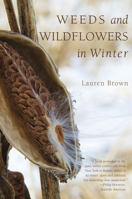 Weeds and Wildflowers in Winter  by  Lauren Brown
