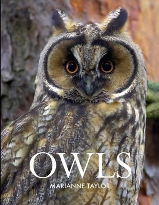 Owls. Marianne Taylor by Marianne Taylor