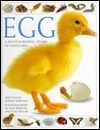 Egg: A Photographic Story of Hatching  by  Robert Burton