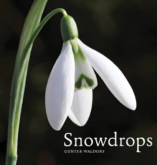 Snowdrops  by  Gunter Waldorf