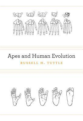 Apes and Human Evolution Russell H. Tuttle