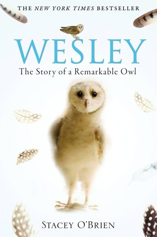 Wesley The Remarkable Story Of An Owl Stacey OBrien