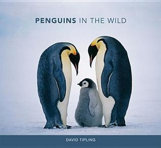 Penguins in the Wild David Tipling