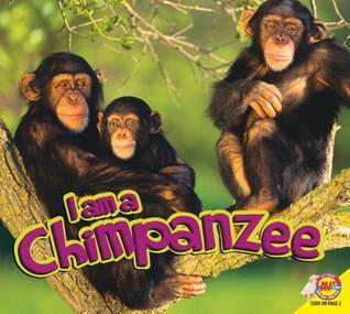 Chimpanzee  by  Aaron Carr