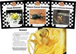 Spiders Set 2: Checkerboard Animal Library Anniversary Edition  by  Jill C. Wheeler