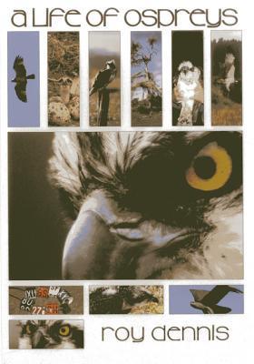 Golden Eagles  by  Roy Dennis