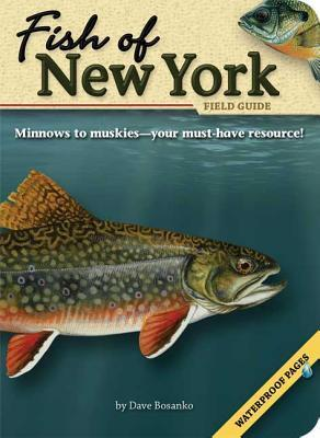 Fish of New York Field Guide Dave Bosanko