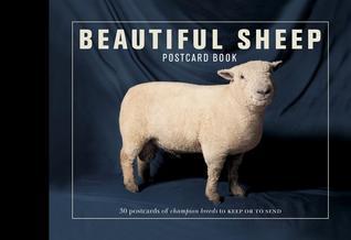 Beautiful Sheep Postcard Book  by  Ivy Press