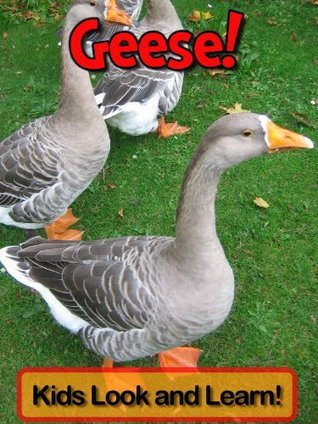 Geese! Learn About Geese and Enjoy Colorful Pictures - Look and Learn! (50+ Photos of Geese)  by  Becky Wolff