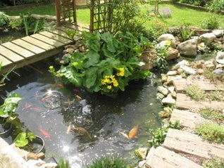 A guide to pond fish and how to care for them Susan Nissim