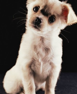 Training Tips For Chihuahuas : Owners Guidebook  by  Jermaine McDonald