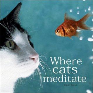 Where Cats Meditate David Baird