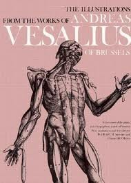 The Anatomical Drawings Of Andreas Vesalius Andreas Vesalius
