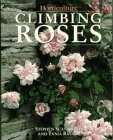 Climbing Roses  by  Stephen Scanniello
