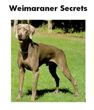 Weimaraner Secrets: How to Raise Happy and Healthy Weimaraners Charles Moats