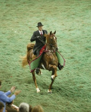 Five Gaits  by  Ron K Truscott