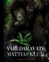 Exploring the Rain Forest Mattias Klum