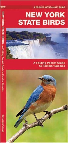 New York State Birds: A Folding Pocket Guide to Familiar Species James Kavanagh