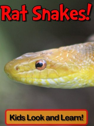 Rat Snakes! Learn About Rat Snakes and Enjoy Colorful Pictures - Look and Learn! (50+ Photos of Rat Snakes) Becky Wolff