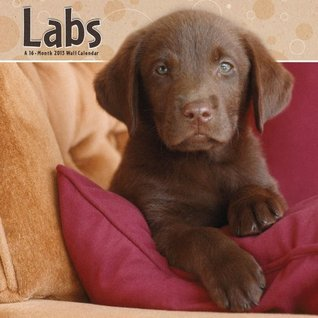 Labs 2013 Wall Calendar  by  NOT A BOOK