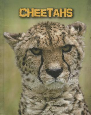 Cheetahs  by  Charlotte Guillain