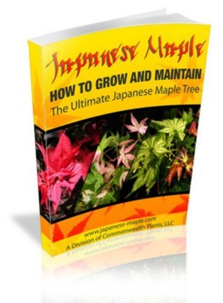 How to Grow the Ultimate Japanese Maple Tree Ken Alston