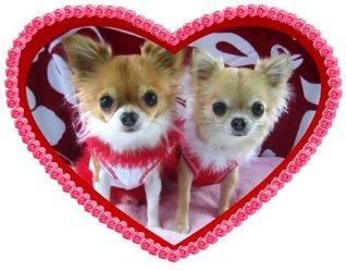 Mimi and Zekes Chihuahua Romance Walter Albertson