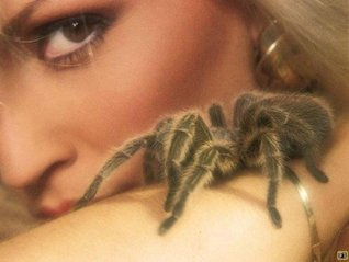 Spiders Bite  by  Bob Price